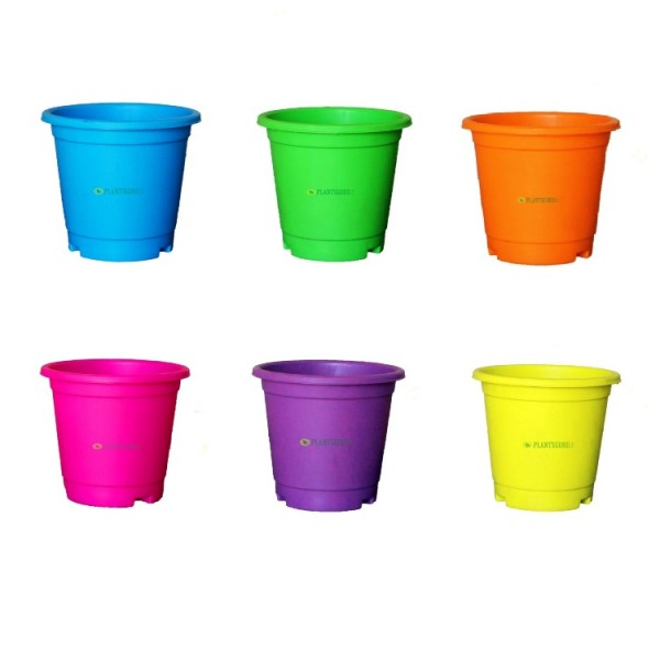 Blossom Pot Mix Color 6 inch with Plate (Pack of 6)