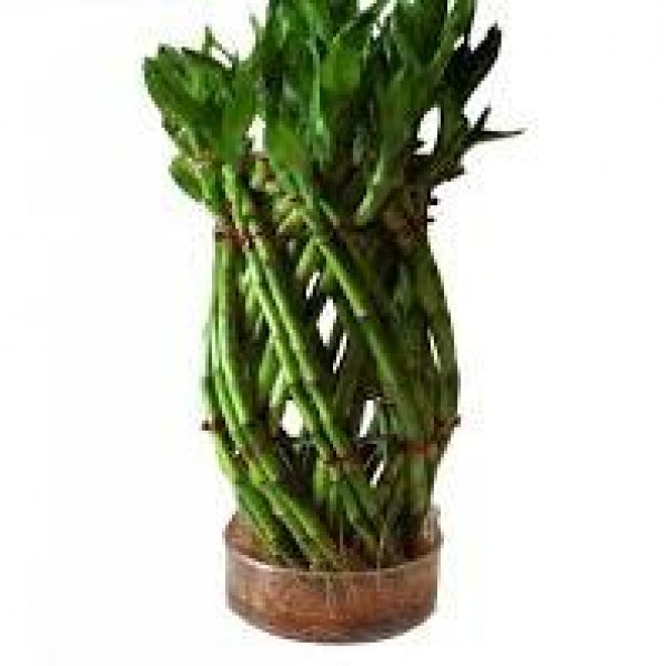 Lucky Bamboo Pineapple Basket