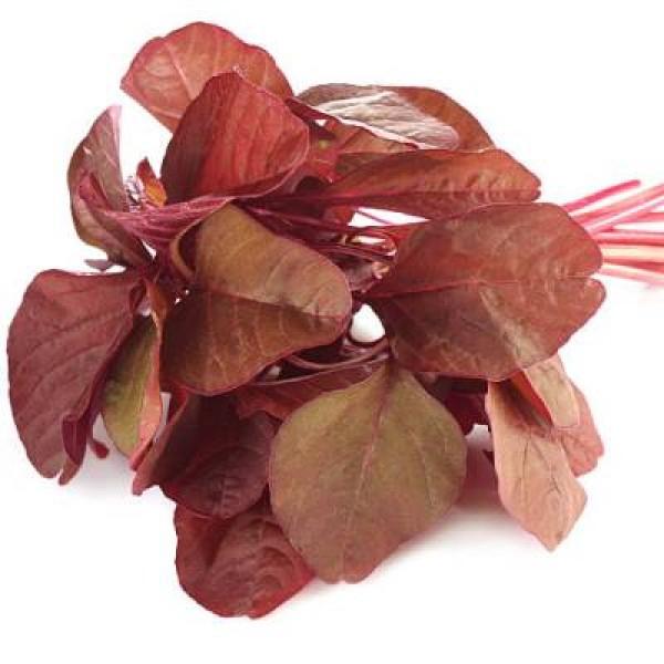 Red Amaranthus Hybrid Seeds