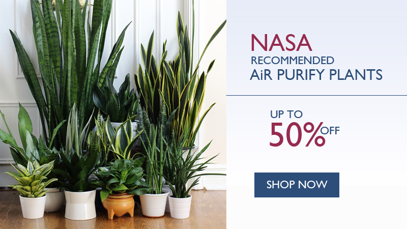 air purify plants