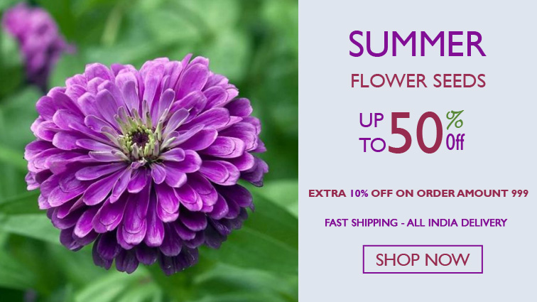 summer flower seeds