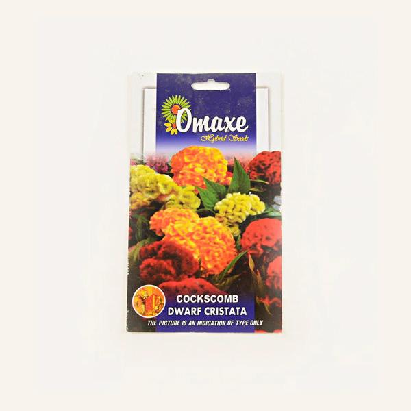 Omaxe Cockscomb Dwarf Cristata Seeds