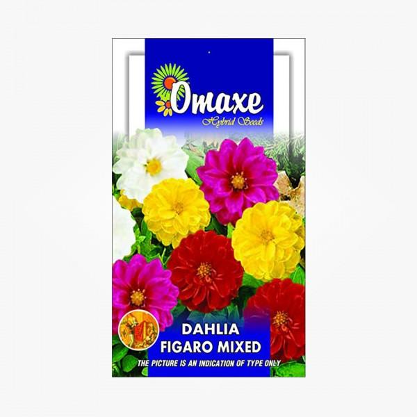 Omaxe Dahlia Figaro Seeds