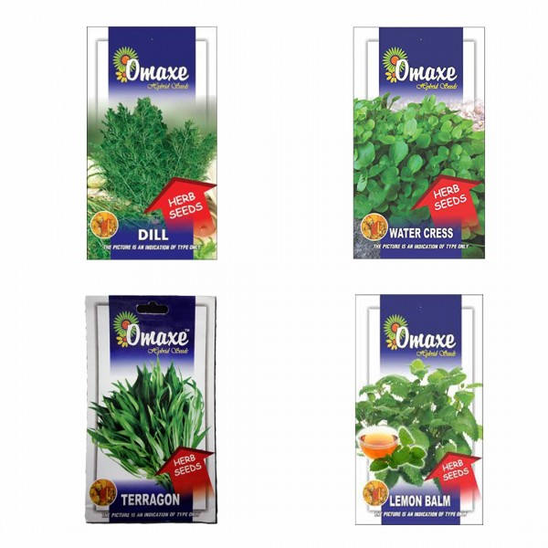 Omaxe Herb Seeds Pack of 4(Red Mint, Marjoram, Lavender, Rocula Leaves)