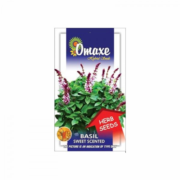 Omaxe Basil Sweet Scented Seeds (80-100 Seeds)