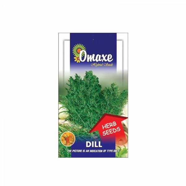 Omaxe Dill Aneth Seeds