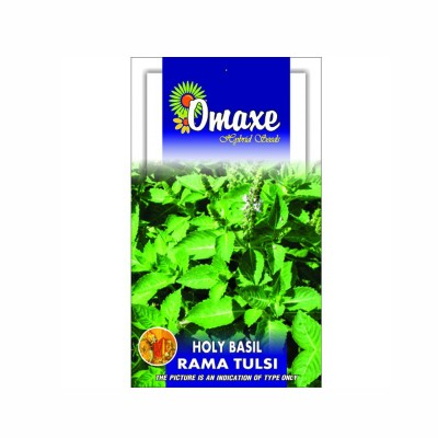 Omaxe Rama Tulsi (Holy Basil ) Pack of 100 Seeds