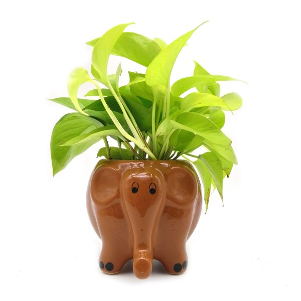 Money Plant in Coffee Elephant Ceramic Pot