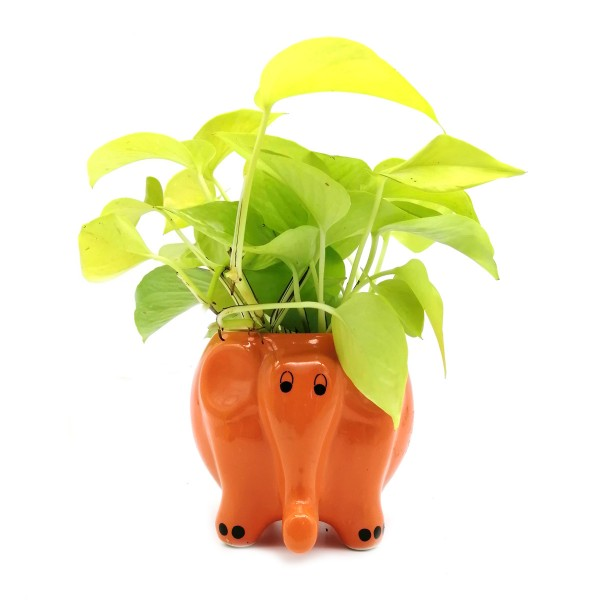 Money Plant in Orange Elephant Ceramic Pot