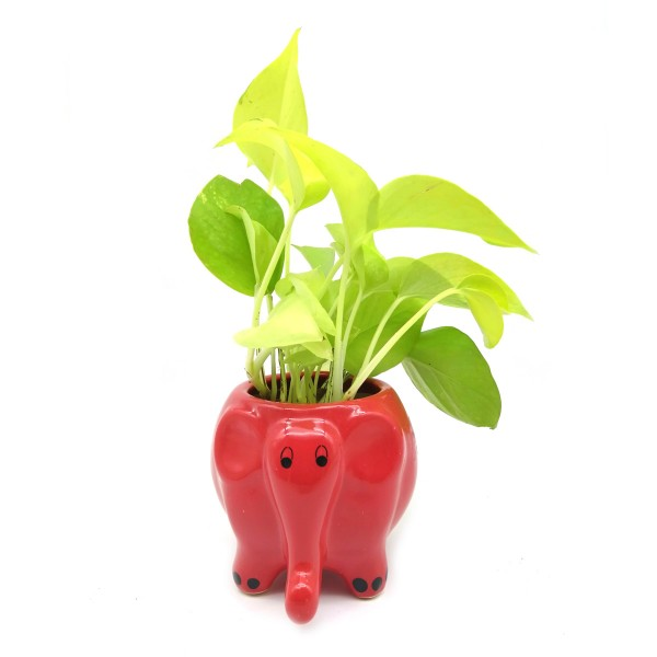 Money Plant in Red Elephant Ceramic Pot