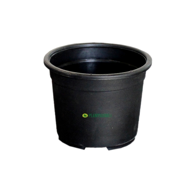 Blossom Pot Black 3 inch (Pack of 5)