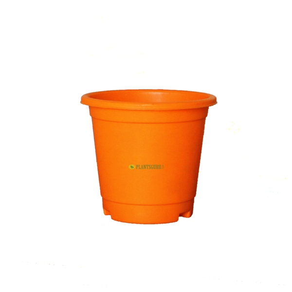 Blossom Pot Orange 6 inch with Plate(Pack of 3)