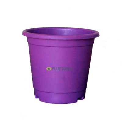 Blossom Pot Violet 6 inch with Plate (Pack of 3)