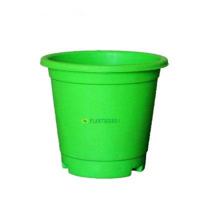 Blossom Pot Green 6 inch with Plate (Pack of 3)