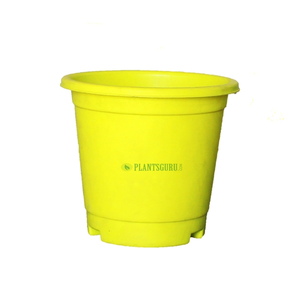 Blossom Pot Yellow 6 inch with Plate (Pack of 3)
