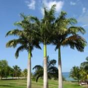 Palms & Cycads