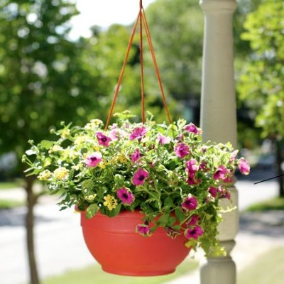Plants in Hanging Basket