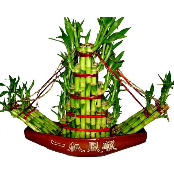 Lucky Bamboo Boat Arrangement