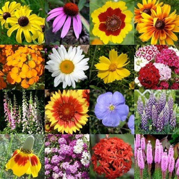 Winter Seasonal Flowers - Set of 18 Seeds Packs