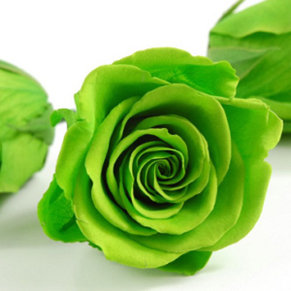 Green Rose Seeds - Pack of 5 Seeds