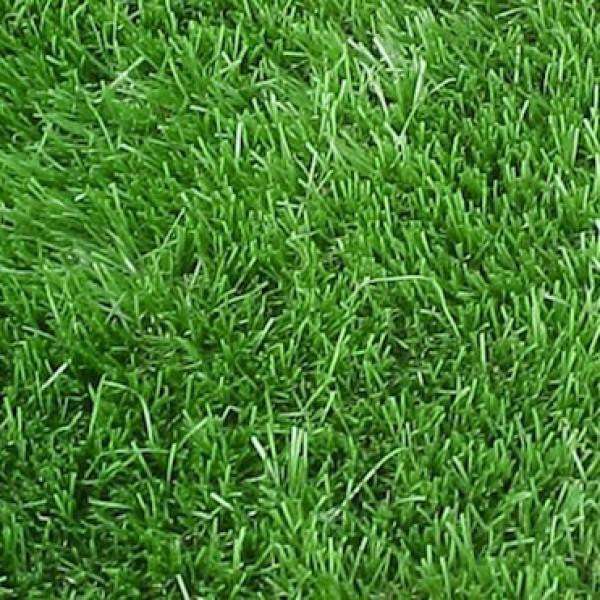 Bermuda Lawn Grass Seeds - 100 Grams
