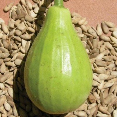Omaxe Bottle Gourd F1 Hybrid Lattu Seeds