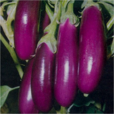 Sunrise Brinjal Gulabi Long Seeds 4gm
