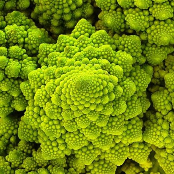 Omaxe Broccoli Romanesco (50 seeds)