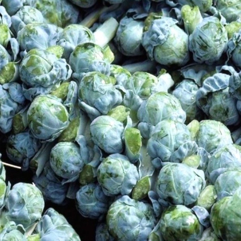 Buy Brussels Sprout Long Island 100 Seeds Online At