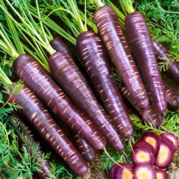 Omaxe Carrot Black Wonder (5 gm) Seeds