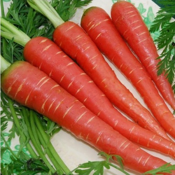 Carrot Selection Red Seeds