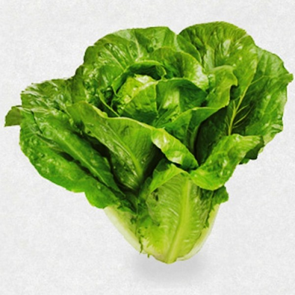 Omaxe Lettuce Imported Romaine (100 seeds)
