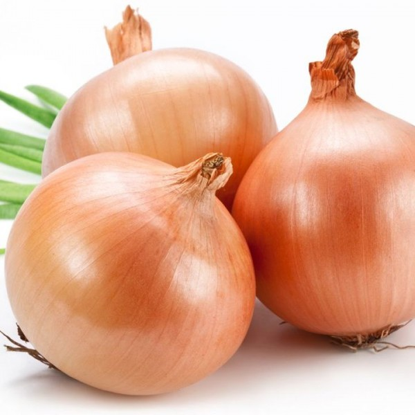 Omaxe Onion Improved Gavran seeds