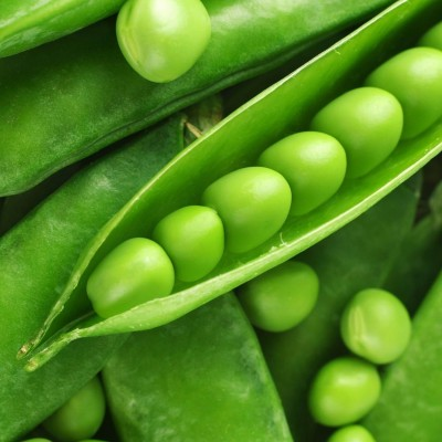 Omaxe Peas Imported OS-10 Seeds