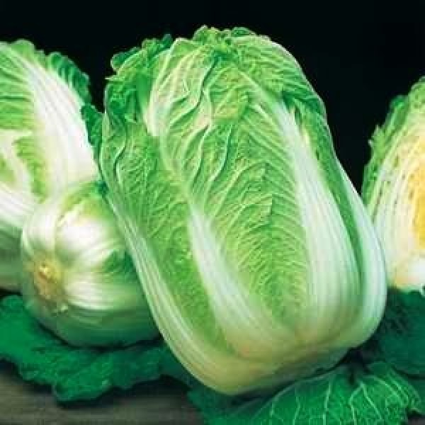 Omaxe Wong Bok Chinese Cabbage (100 seeds)