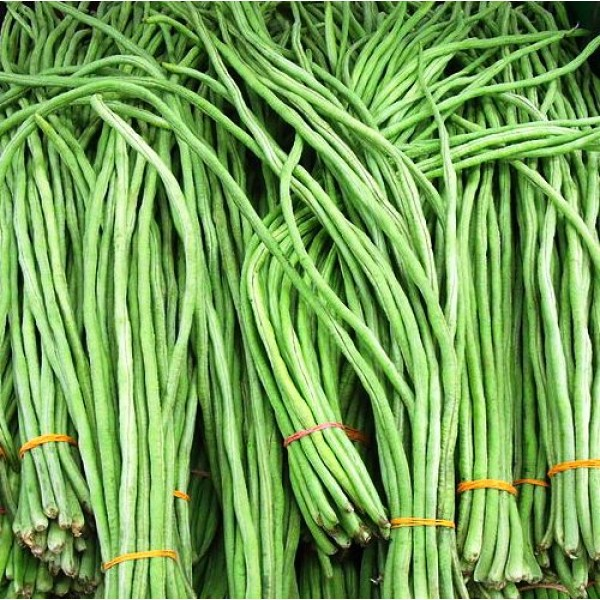 Omaxe Yard long Beans Imported (40 seeds)