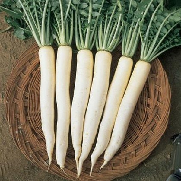 Sunrise Radish Hybrid Seeds 7gm