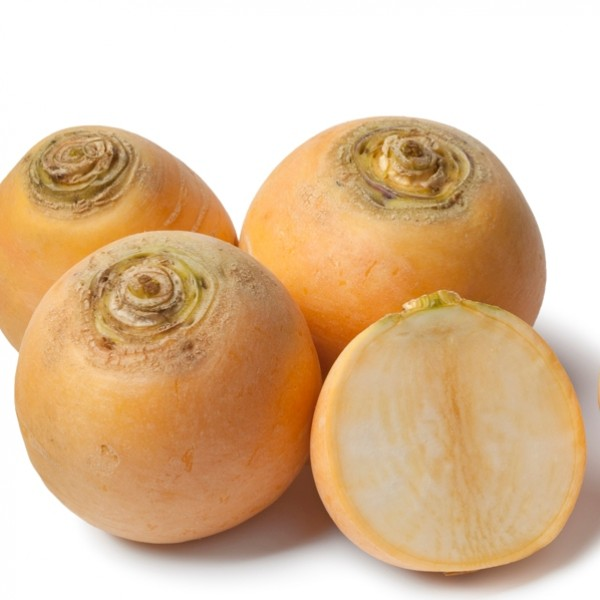 Omaxe Turnip Imported Golden Yellow (5gm)