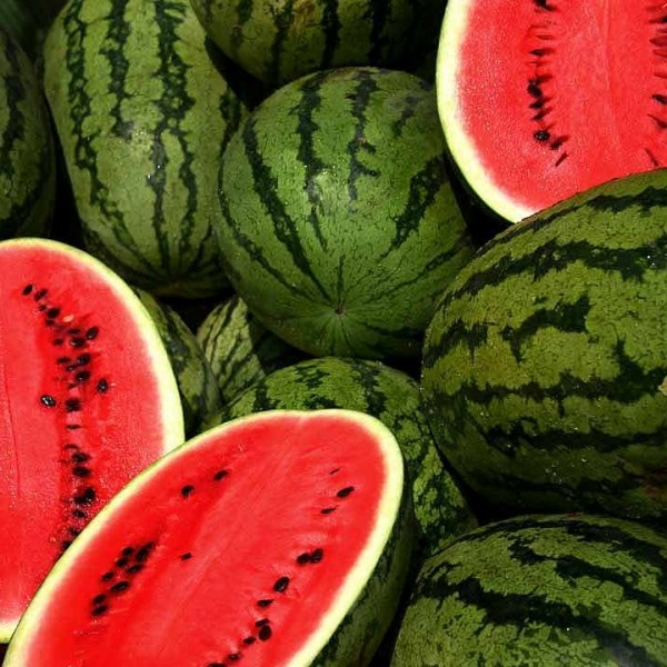 Sunrise Water Melon Hybrid Seeds 5gm
