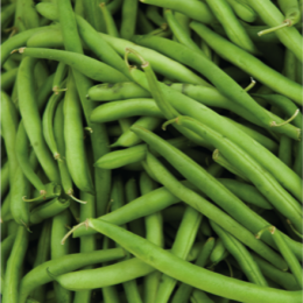 Omaxe France Beans-Selection seeds