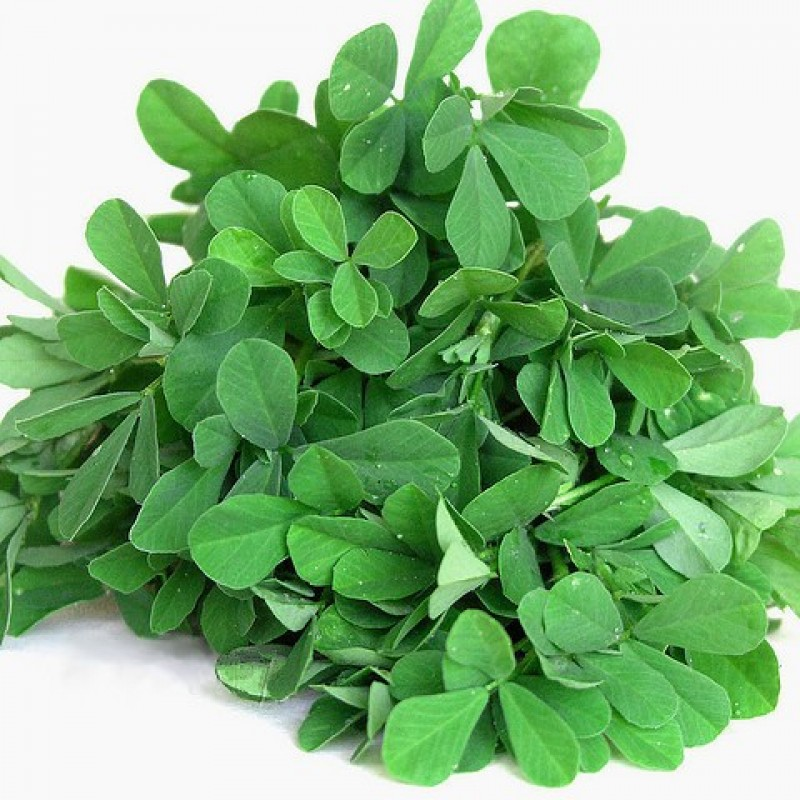 Buy Methi (Fenugreek) Seeds online at low price at plantsguru.com