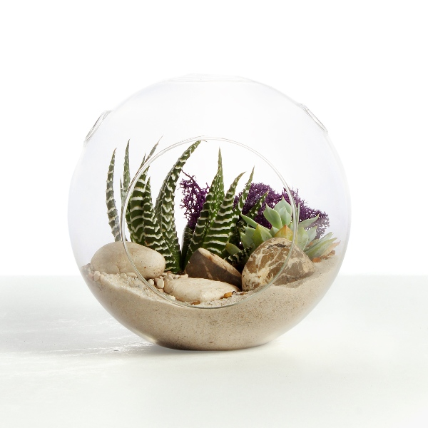 Open Terrarium Small with Haworthia