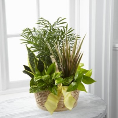 Plants for Marriage