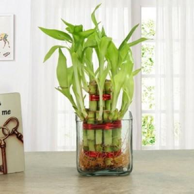 Plants for Parents