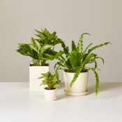 Plants for Return Gifts