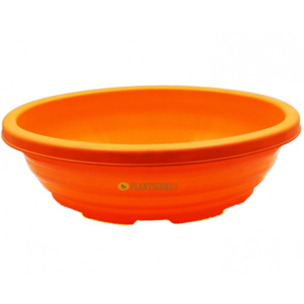 Bonsai Oval Orange 12 Inch (Pack of 2)