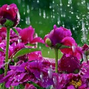 Monsoon Flower Plants
