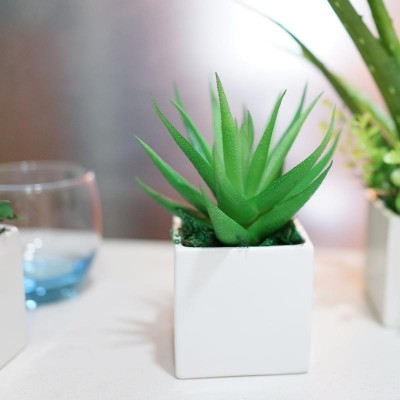 Plants for Office Desk