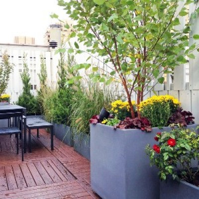 Plants for Terrace