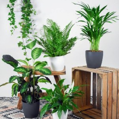 Top 10 Air Purifier Plants